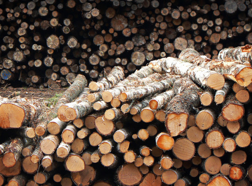 tala ilegal de madera neobis